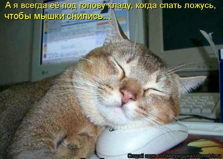 Котоматрица: А я всегда её под голову кладу, когда спать ложусь, чтобы мышки снились...
