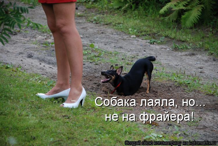 Котоматрица: не на фрайера! Собака лаяла, но...