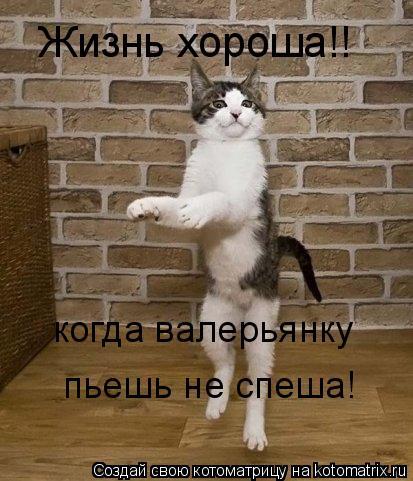 Котоматрица: Жизнь хороша!!  когда валерьянку пьешь не спеша!