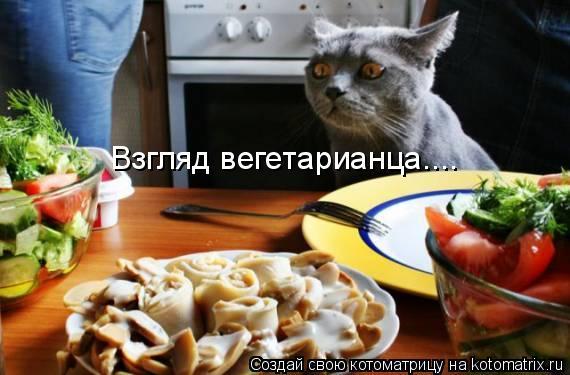 Котоматрица: Взгляд вегетарианца....