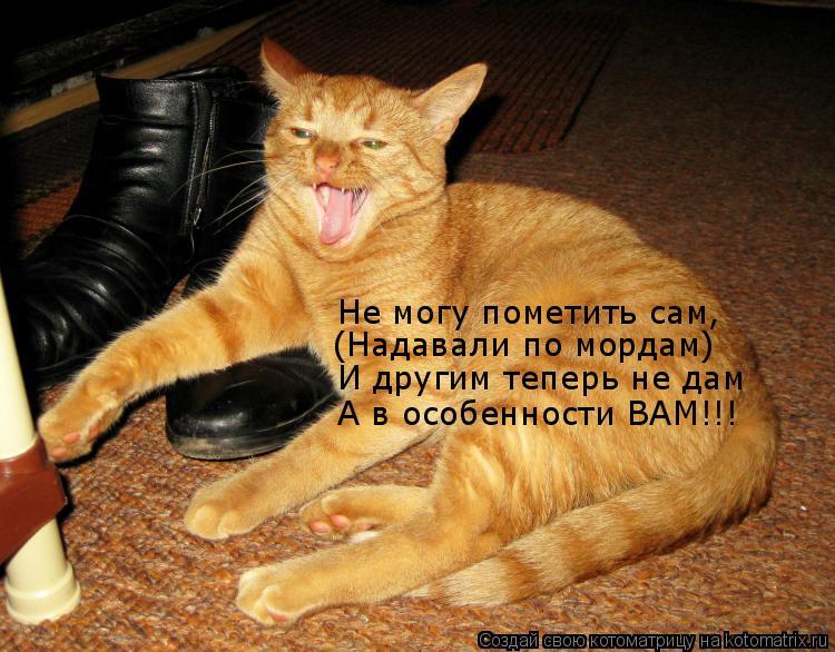 Котоматрица: Не могу пометить сам, (Надавали по мордам) И другим теперь не дам А в особенности ВАМ!!!