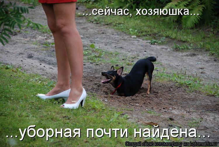 Котоматрица: ...сейчас, хозяюшка... ...уборная почти найдена...