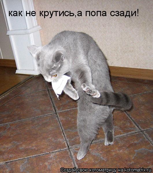 Котоматрица: как не крутись,а попа сзади!