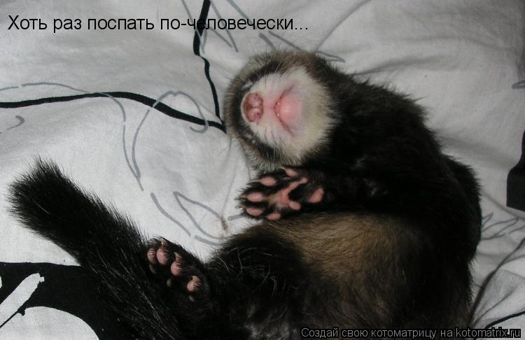 Котоматрица: Хоть раз поспать по-человечески...