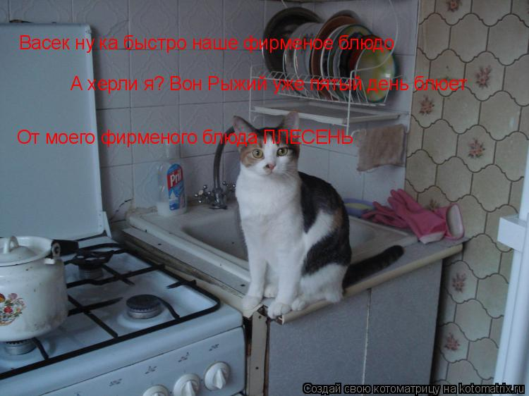 Котоматрица: Васек ну ка быстро наше фирменое блюдо А херли я? Вон Рыжий уже пятый день блюет  От моего фирменого блюда ПЛЕСЕНЬ
