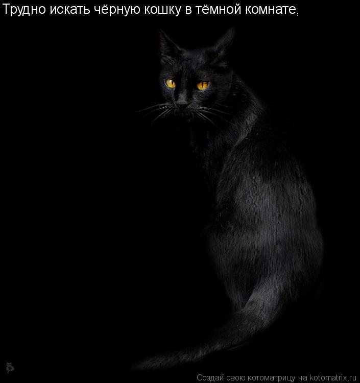 Котоматрица: Трудно искать чёрную кошку в тёмной комнате,