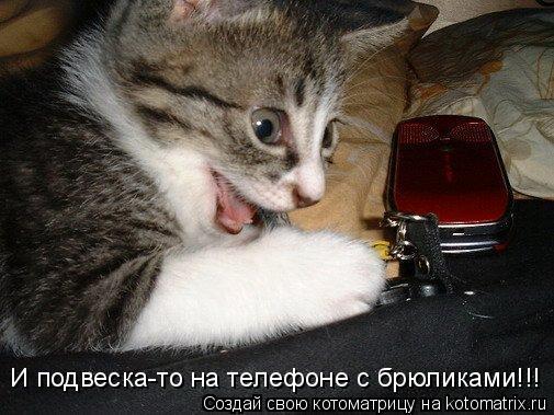 Котоматрица: И подвеска-то на телефоне с брюликами!!!