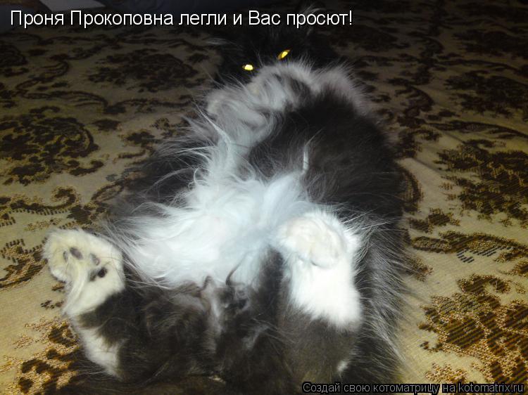 Котоматрица: Проня Прокоповна легли и Вас просют!