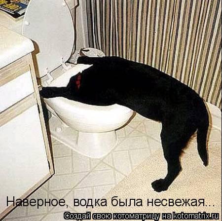 Котоматрица: Наверное, водка была несвежая...