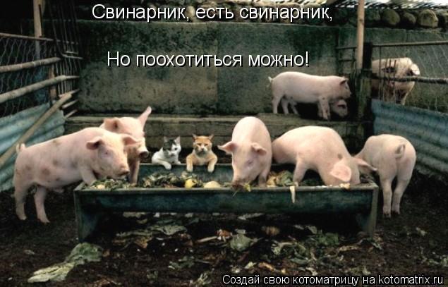 Котоматрица: Свинарник, есть свинарник, Но поохотиться можно!