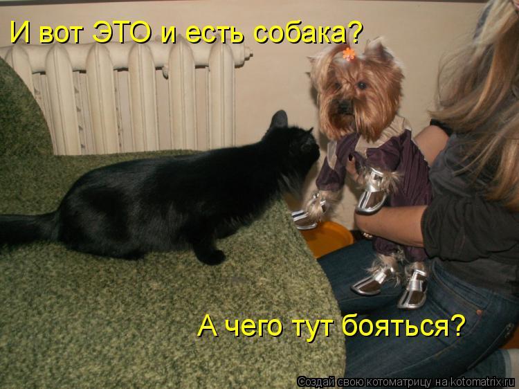 Котоматрица: И вот ЭТО и есть собака? А чего тут бояться?
