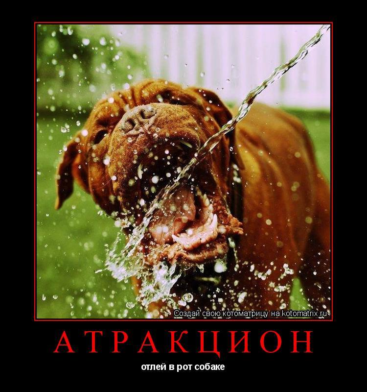 Котоматрица: атракцион отлей в рот собаке