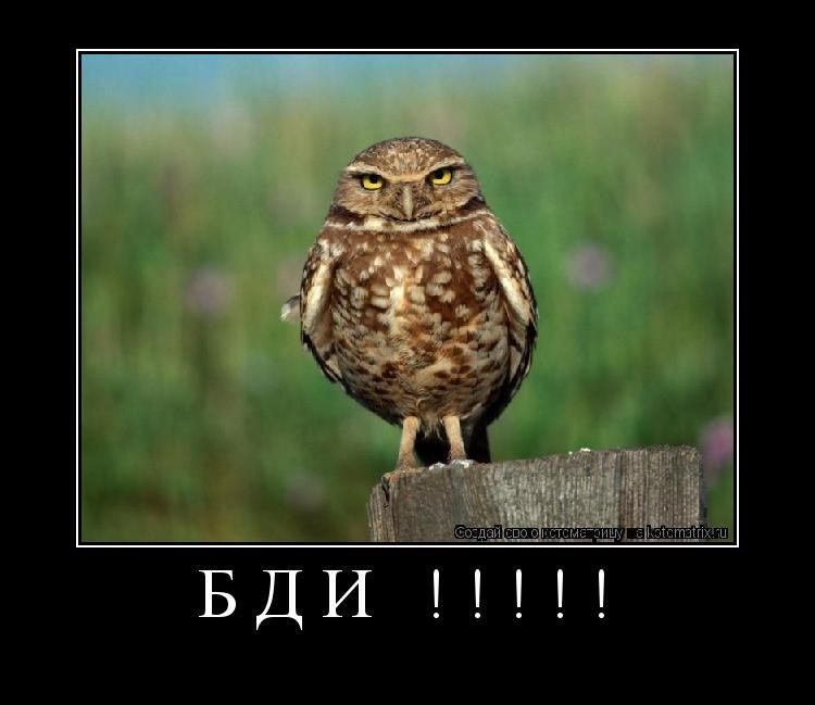 Котоматрица:     БДИ !!!!!