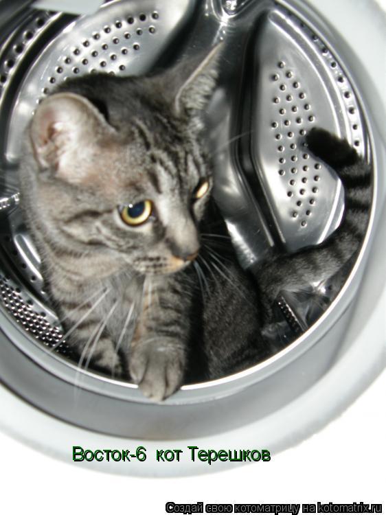 Котоматрица: «Восток-6» кот Терешков