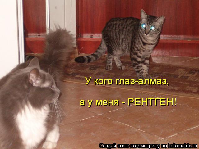 Котоматрица: У кого глаз-алмаз, а у меня - РЕНТГЕН!