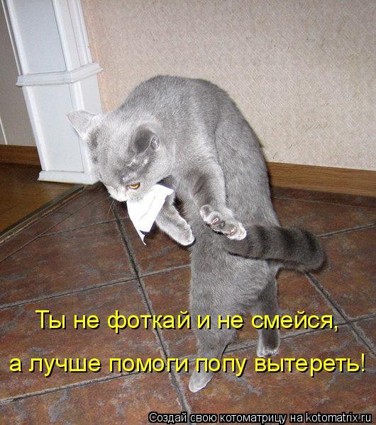 Котоматрица: Ты не фоткай и не смейся, а лучше помоги попу вытереть!