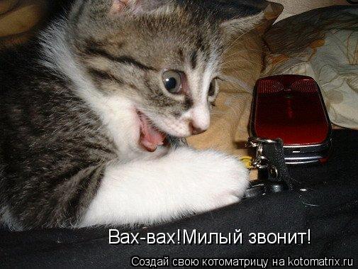 Котоматрица: Вах-вах!Милый звонит!