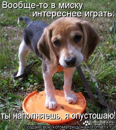 Котоматрица: Вообще-то в миску  интереснее играть: ты наполняешь, я опустошаю!