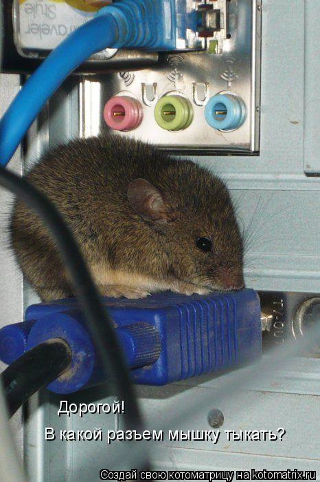 Котоматрица: Дорогой!  В какой разъем мышку тыкать?