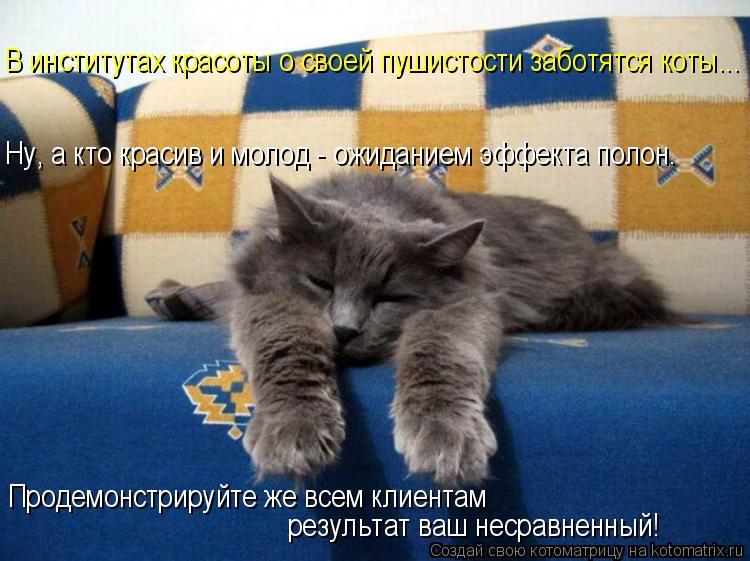 Котоматрица: В институтах красоты о своей пушистости заботятся коты... Ну, а кто красив и молод - ожиданием эффекта полон. Продемонстрируйте же всем клиен