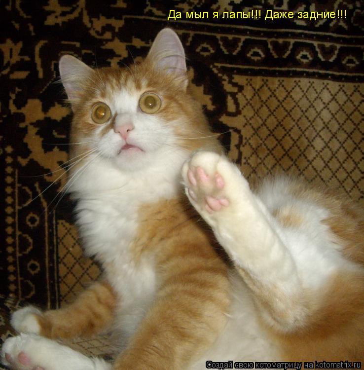 Котоматрица: Да мыл я лапы!!! Даже задние!!!