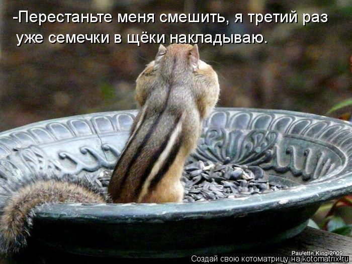 Котоматрица: -Перестаньте меня смешить, я третий раз  уже семечки в щёки накладываю.