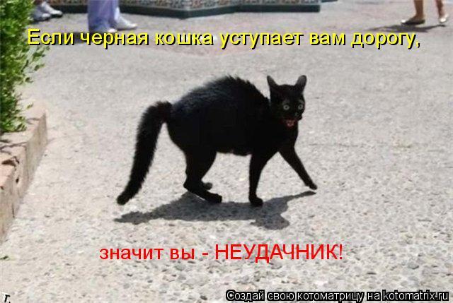 Котоматрица: Если черная кошка уступает вам дорогу, значит вы - НЕУДАЧНИК!