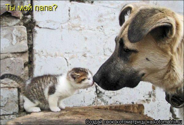 Котоматрица: Ты мой папа?