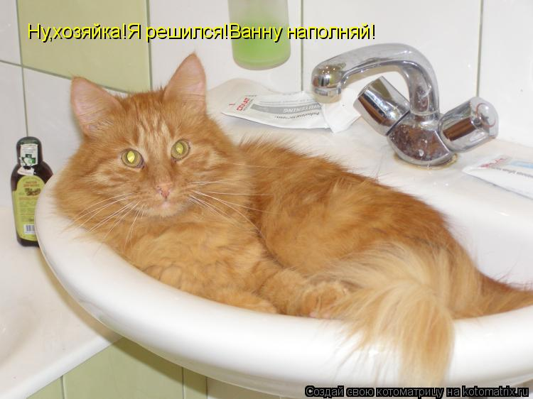 Котоматрица: Ну,хозяйка!Я решился!Ванну наполняй!