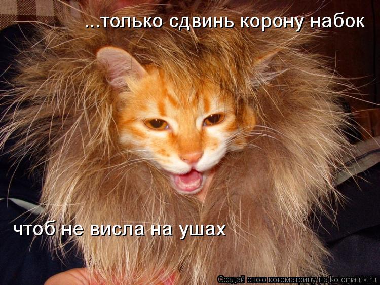 Котоматрица: ...только сдвинь корону набок чтоб не висла на ушах