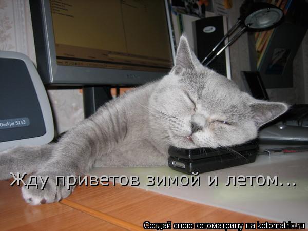 Котоматрица: Жду приветов зимой и летом...