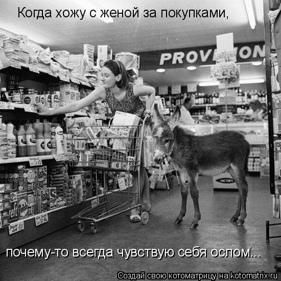 Котоматрица: Когда хожу с женой за покупками, почему-то всегда чувствую себя ослом...