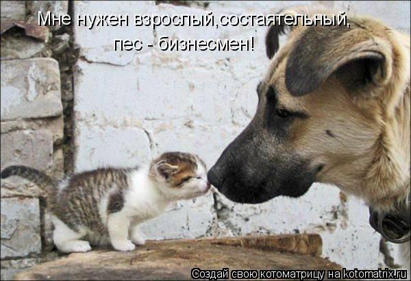 Котоматрица: Мне нужен взрослый,состаятельный, пес - бизнесмен!