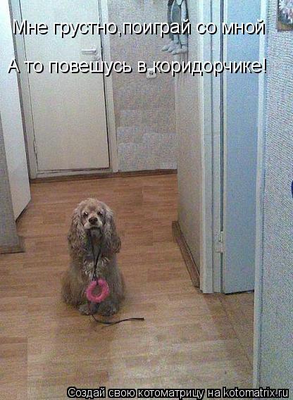 Котоматрица: А то повешусь в коридорчике! Мне грустно,поиграй со мной