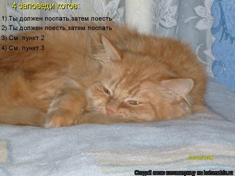 Котоматрица: 1) Ты должен поспать,затем поесть 2) Ты должен поесть,затем поспать 3) См. пункт 2 4) См. пункт 3 4 заповеди котов: