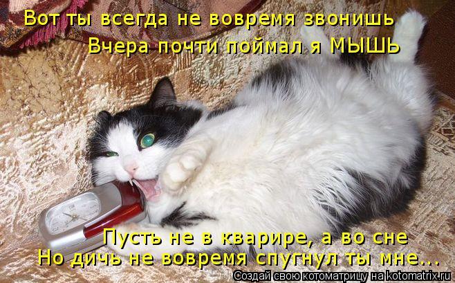 Котоматрица: Вот ты всегда не вовремя звонишь Вчера почти поймал я МЫШЬ Пусть не в кварире, а во сне Но дичь не вовремя спугнул ты мне...