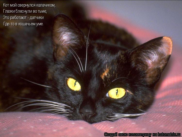 Котоматрица: Кот мой свернулся калачиком, Глазки блеснули во тьме, Это работают - датчики Где-то в кошачьем уме.