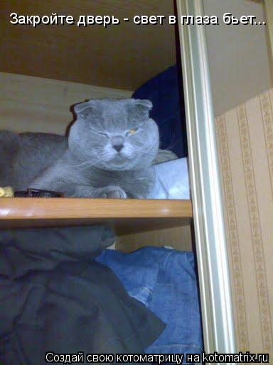Котоматрица: Закройте дверь - свет в глаза бьет...