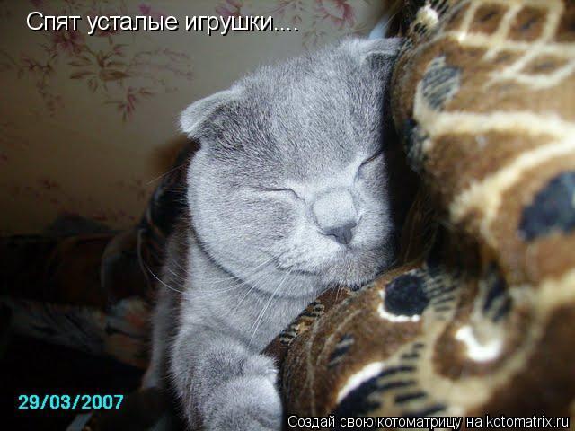Котоматрица: Спят усталые игрушки....