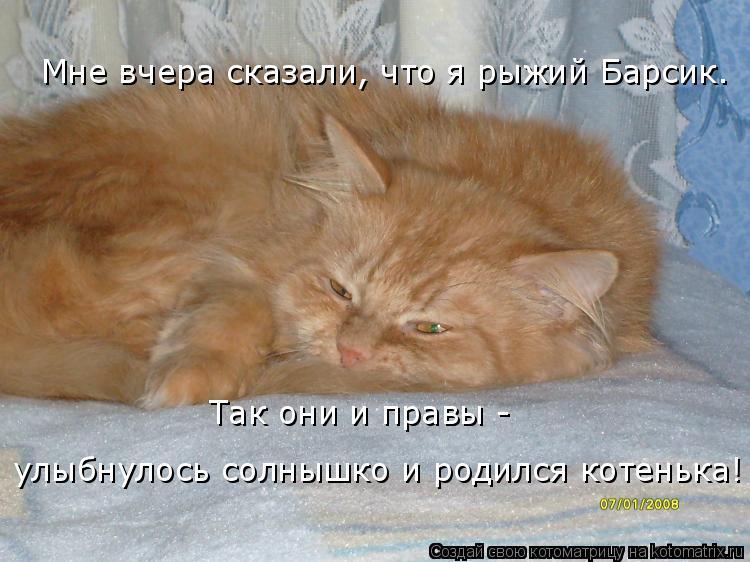 Котоматрица: Мне вчера сказали, что я рыжий Барсик. Так они и правы - улыбнулось солнышко и родился котенька!