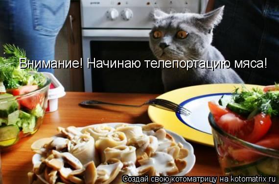 Котоматрица: Внимание! Начинаю телепортацию мяса!