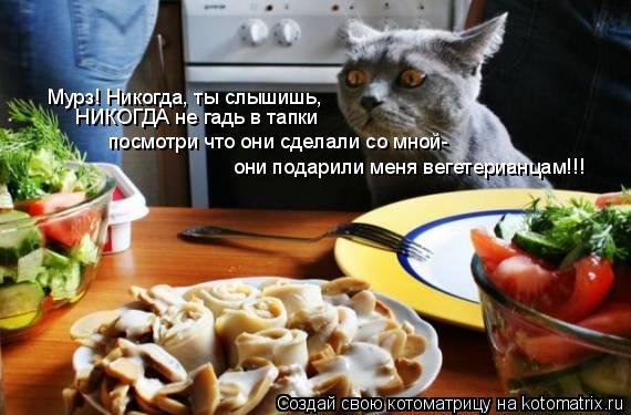 Котоматрица: они подарили меня вегетерианцам!!! Мурз! Никогда, ты слышишь, НИКОГДА не гадь в тапки посмотри что они сделали со мной-