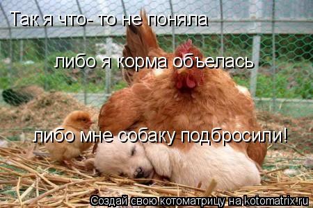 Котоматрица: Так я что- то не поняла либо я корма объелась либо мне собаку подбросили!