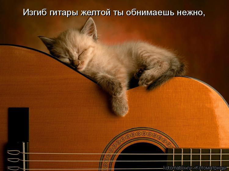 Котоматрица: Изгиб гитары желтой ты обнимаешь нежно,