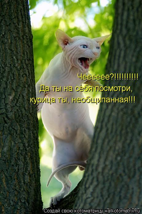 Котоматрица: Чёёёёёё?!!!!!!!!!! Да ты на себя посмотри, курица ты, необщипанная!!!