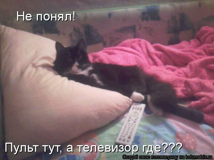 Котоматрица: Не понял! Пульт тут, а телевизор где???