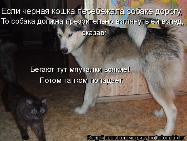 Котоматрица: Если черная кошка перебежала собаке дорогу, То собака должна презрительно взглянуть ей вслед, сказав: Бегают тут мяукалки всякие! Потом тап