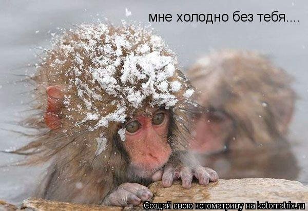 Котоматрица: мне холодно без тебя....