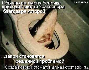 Котоматрица: Обычно на смену белочке  приходит милая кракозябра благодаря которой  ...запои становятся  решенной проблемой