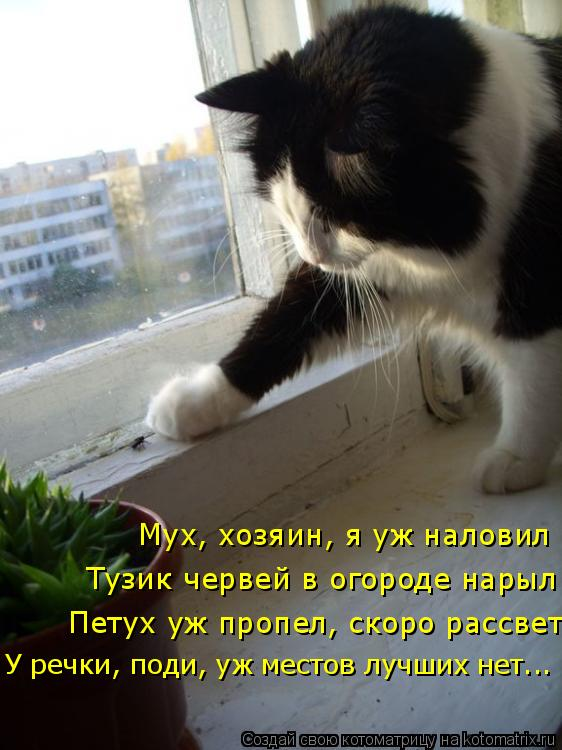 Котоматрица: Мух, хозяин, я уж наловил Тузик червей в огороде нарыл У речки, поди, уж местов лучших нет... Петух уж пропел, скоро рассвет